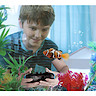Remote Control Robo Fish With Tank - Orange