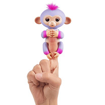 Fingerling Two Tone Monkey - Sydney